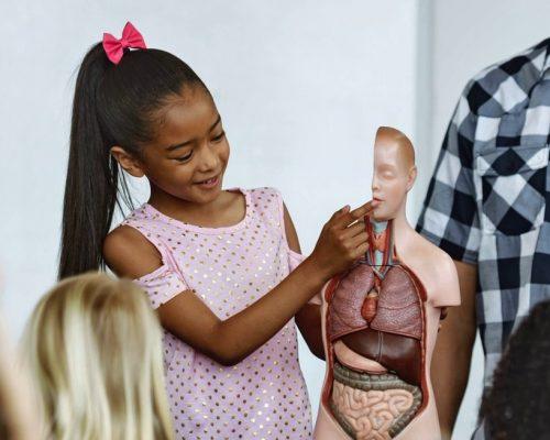 Front view of mixed-race schoolgirl standing behind professor desk showing a dummy skeleton to others school kids in classroom at school