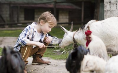 little-kid-playing-with-farm-animals